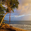 Puerto Rico Palm Lined Beach With Boat At Sunset by Jo Ann Tomaselli