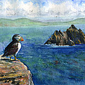 Puffin At Skellig Island Ireland by John D Benson