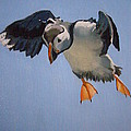 Puffin Landing by Eric Burgess-Ray