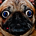 Pug Dog - Electric by Wingsdomain Art and Photography