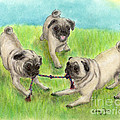 Pug Dog Playing Canine Animal Pets Art by Cathy Peek