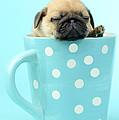 Pug In A Cup by Greg Cuddiford