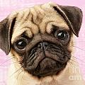 Pug Portrait by Greg Cuddiford