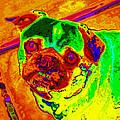 Pug Portrait Pop Art by Eti Reid