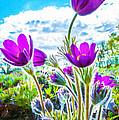 Pulsatilla Vulgaris Flowers by Jeelan Clark