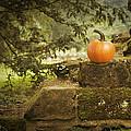 Pumpkin by Amanda Elwell
