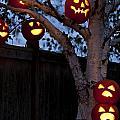 Pumpkin Escape Over Fence by Jim Corwin