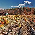 Pumpkin Field by Allen Beatty