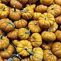 Pumpkin Galore. by Eduardo De Moya
