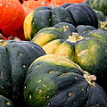 Pumpkin Harvest by Christiane Schulze Art And Photography