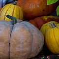 Pumpkin Harvest  by Michael Moriarty