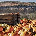 Pumpkin Harvest by Ray Summers Photography