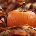 Pumpkin In Leaves by Kim Fearheiley