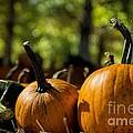 Pumpkin Line Up by Peggy Hughes