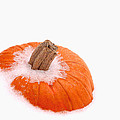 Pumpkin On Ice by David and Carol Kelly