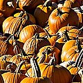 Pumpkin Patch  by Aaron Berg