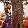Pumpkin Patch Crow by Barbara McDevitt