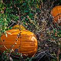 Pumpkin Patch by Gene Sherrill