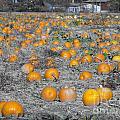 Pumpkin Patch by Jaden Norton