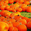 Pumpkin Patch by Paul Wilford