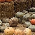 Pumpkin Patch by Suzanne Luft