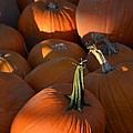 Pumpkin Patch by Toby McGuire