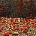 Pumpkin Season by Elizabeth Winter