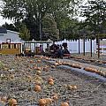Pumpkin Train by Image Takers Photography LLC - Carol Haddon