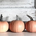 Pumpkin Trio by Angie Mahoney