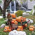 Pumpkin Waterfall by Vivian Martin