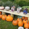 Pumpkins And Birdhouses by Image Takers Photography LLC - Carol Haddon
