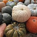 Pumpkins And Gourds by Barbara McDevitt