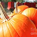 Pumpkins by Andrea Anderegg