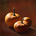 Pumpkins by Angie Vogel