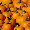 Pumpkins by Anthony Sacco