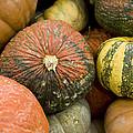 Pumpkins by David Millenheft