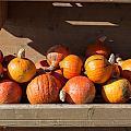 Pumpkins For Sale by Frank Gaertner