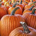 Pumpkins Galore - Autumn - Halloween by Jason Politte