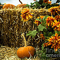 Pumpkins Hay And Artificial Flowers by Imagery by Charly