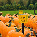 Pumpkins II by Mary  Smyth