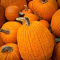 Pumpkins by Inge Johnsson