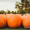 Pumpkins by Mary  Smyth