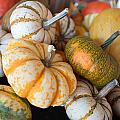 Pumpkins On Pumpkin Patch by Alex Grichenko
