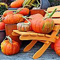 Pumpkins by Paul Fell