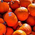 Pumpkins by Robert McCulloch