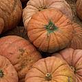 Pumpkins by Suzanne Luft