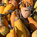 Pumpkins Up Close by Alex Vishnevsky