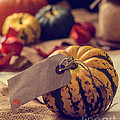 Pumpkins With Label by Amanda Elwell