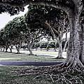 Punchbowl Cemetery - Hawaii by Daniel Hagerman