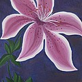 Punctilious Pink Daylily by Deborah Schuster
